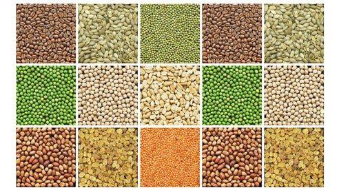 seeds_2-53f25dea9bb246bf106285d42a326c51
