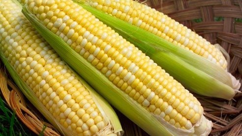 corn_on_the_cob-e7dac16cd119f0375d64484efea32eff