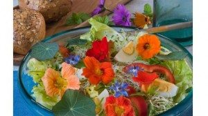 Salad with Nasturtium leaves and flowers and Borage flowers
