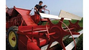 Blake Yoder operates an antique combine that Tropea modified to harvest his 15-acre mint crop. Tropea can harvest 1/2 acre or about 500 pounds of tea per day.
