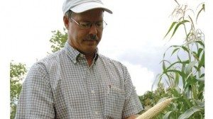 Pete Hazel picks an ear of popcorn at the Humphrey Farm in Huron County.