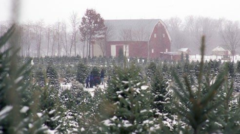 tree_farm_winter-1fa47ae8f3a76396bb2ebe751cb5eb07