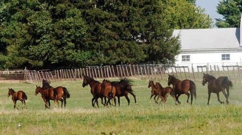 Midland Acres mares and colts out in the pasture.