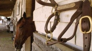 The stables at Scioto Downs provide a respite for the horses.