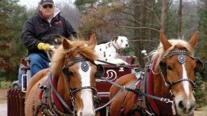 People aren't the only ones who enjoy the free horse-drawn wagon rides at Whitehouse.