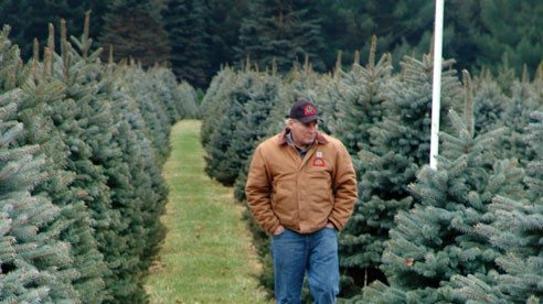 Duke Wheeler inspects one of his many rows of trees that are ready to go home for the holidays.