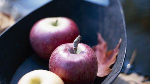 apples_fall-0ef7ccfca4ae0b37c18ecb1d308cf94b