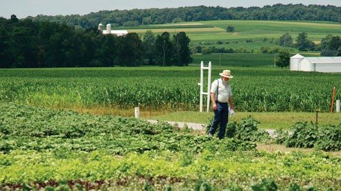 Produce from this Amish farm will be sold under the Green Field Farms label.