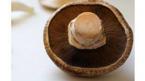 Portabella Mushroom