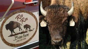Steve Slifko will truck a variety of bison cuts to farmers' markets all across northeast Ohio. These are the best venues for Slifko to educate potential customers on the great tastes and nutritional value of bison meat.