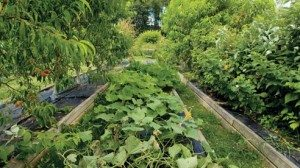 It may look unkempt, but the farm's design has proven economical and efficient.
