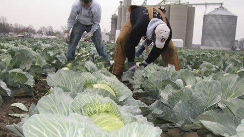 A Harvest From The Heart Ohio Farm Bureau