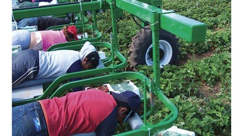 This Easy Pick Harvest Assistant, which provides a comfortable way to collect berries, is among the countless farm inventions featured in Farm Show magazine.