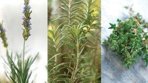 Lavender, Rosemary, Thyme
