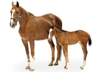 horse_n_colt