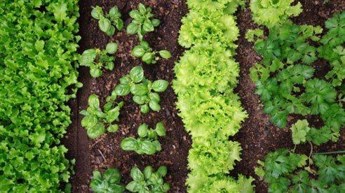 veggie_patch-808bdfdbd037aaa2aed7a015024b4e7a