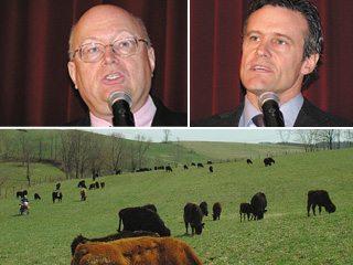 cows_zulauf_boyd