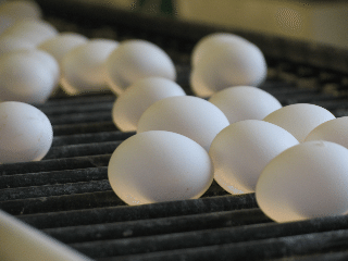 Ohio is the nation's second largest egg producer
