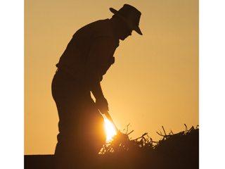 Seneca County edamame grower Charles Fry
