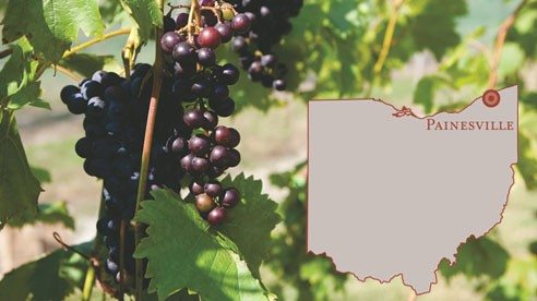 The grapes grow in Solvay material (crushed calcium and limestone), which is safe and resembles chalk.