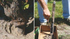 Researchers take a soil sample to check it.