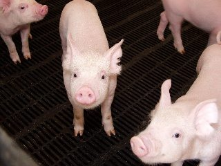 AFBF's chief economist said the pork industry is facing challenges that will fundamentally alter it.