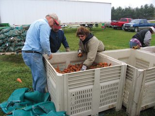 Fulton County Farm Bureau volunteers bag carrots that were donated to Ohio food banks.