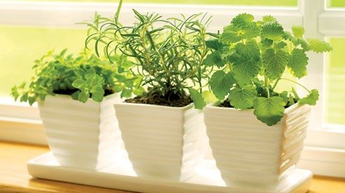 herbs_window-ba2d5733bc9557008a62e1fdf6248f8b
