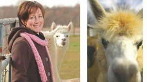 Alpacas are valued for their soft fleeces.  Ohio has more alpacas than any other state.