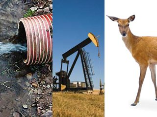 OFBF is currently following state legislation involving drainage, oil drilling, deer and several other issues.