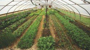 green_up_diet_3-35b509a9051921a7f16eccea58c49d7c