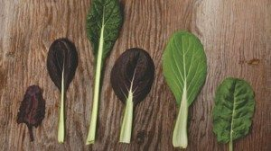 "Left to right: Bull's Blood Beet Greens (Tender and Sweet), Red Komatsuna (Slightly Spicy), Yukina Savoy (Mild and Sweet), Red Pac Choi (Crunchy and ""Spinach-like""), Green Pac Choi (Crunchy and ""Spinach-like""), Bionda Di Lyon Chard (Tender and Mild)"