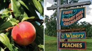 When the locals see the peach sign hanging, they know that the peach season is upon them.