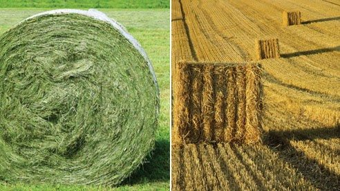 Hay (left), straw