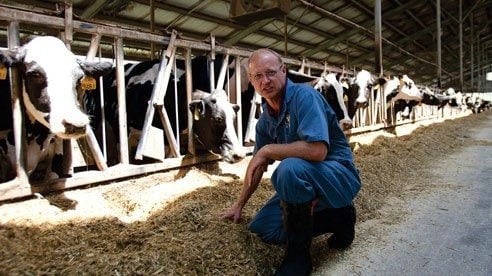 Dr. Rick Daugherty looks over the cows' feed to ensure it is clean and dry.