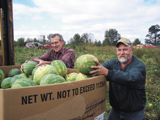 Volunteers help harvest a field of watermelons, which were later donated to a food bank.