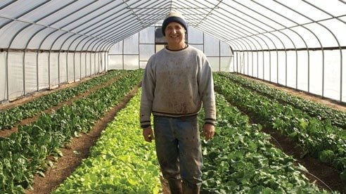 Kip Rondy basks in the winter bounty of fresh greenhouse grown greens at Green Edge Gardens.