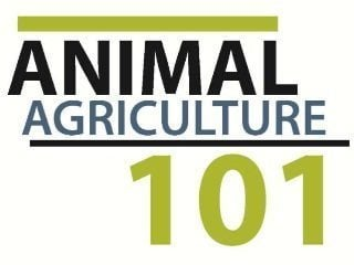 Click the video above to learn more about Animal Agriculture 101 from Dr. Leah Dorman.