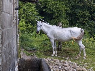 Supporters of horse processing say it is a humane end of life option for animals that might be abandoned or neglected.