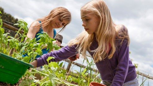planting_tomatoes-e161098270679f461c19d68565887e08