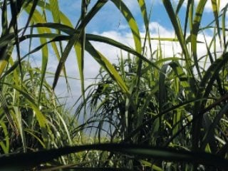 Farmers are considering if miscanthus grass could provide an economic boost to northeast Ohio.