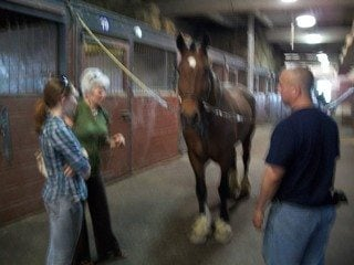 Members of the Cuyahoga Farm Bureau Equine Committee visit with Chester and Sgt Mike Medwid