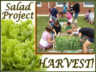 Salad_Project1