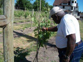 Mansfield Frazier tends his vineyard