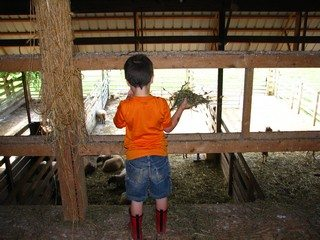 Children complete farm chores each morning at Stratford Ecological Center's Farm Camps