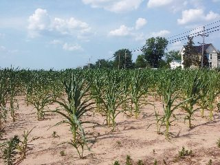 While late rains have helped some crops recover, for many farmers across Ohio, the damage was already done.