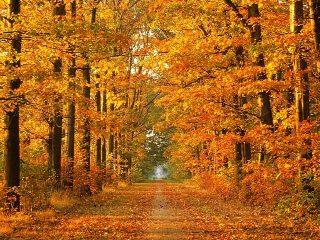 Autumn-tree1