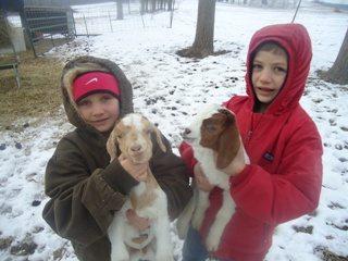 butler_goats_320x240