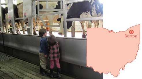 A cow greets young visitors in the milking barn.