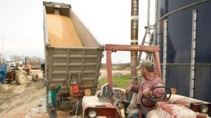 Kevin Baker, right, watches while a truckload of grain is unloaded.